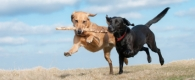 dogs playing offleash